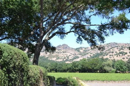 Napa Valley 126