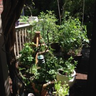 morning sun in kitchen garden